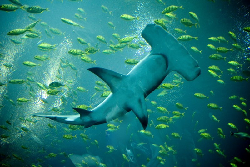 Prey for the oceans: How marine predators influence reef ...