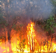 Extreme fire weather forecast for Australia and theMediterranean