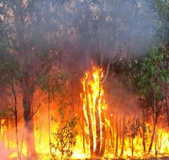 bushfire_bertknot