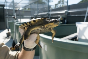 Turtle deaths highlight precarious environmental situation